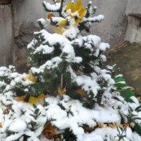 А теперь снежком присыпало :: Mary Коллар