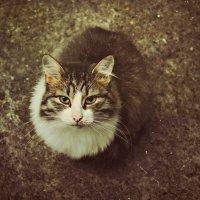 Если коту чего-то не дать, он подождет, пока вы отвернетесь, и возьмет сам. :: ...Настя ...