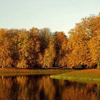 Золото в парке :: Alexander Andronik