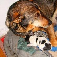 а у сына есть охрана, и зовут охрану мама!!! :: vladimir polovnikov
