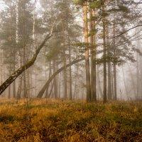 Утренний туман :: Олег Мартоник