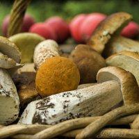 Корзинка полная грибов... :: Елена Kазак