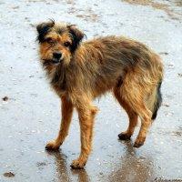 Собачья погода сегодня, однако, вы не находите?:) :: Андрей Заломленков