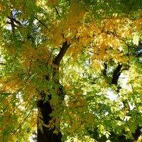 Красивое начало осени :: татьяна