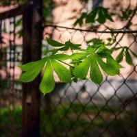 Начало пути. Весна. :: Вадим