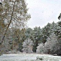 Октябрь... Первый снег. :: Михаил Столяров