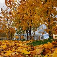 Золотит октябрь листья на деревьях :: Анатолий Клепешнёв