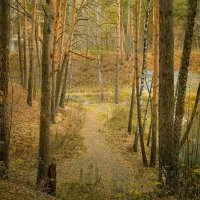 Осень :: Сергей Лисов