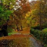 Сырая осень :: Сергей Карачин