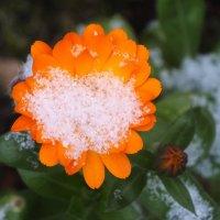 Первый снег :: Зоя Мишина