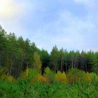 И лес, накрывшись тишиной, стоит.... :: Валентина ツ ღ✿ღ