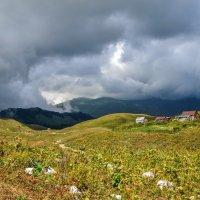 Высокогорные луга Абхазии :: Ирина Никифорова