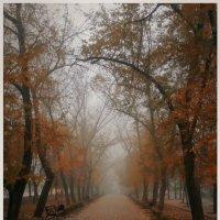 *********** :: Sergii VIdov