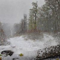 Первый снег в Воронежской нагорной дубраве. Серия. Фото 1 :: Павел Попов