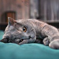 ..Я не я ленивая, это во мне твои ленивые голубцы ... :: Лилия .