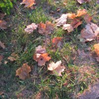 осень :: Зинаида