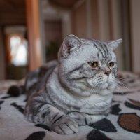 кот Марсель :: Ольга Кошевая