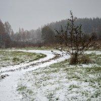 """Из серии"""" Первый снег"""" :: Тамара Цилиакус"""