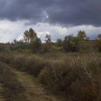 Степная дорога :: Владимир Стаценко