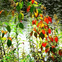 Краски октября :: Маргарита Батырева