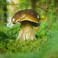 Под елочкой в лесу. :: Елена Kазак