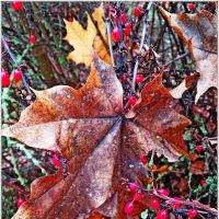 Что такое осень? Это - листья! :: Vladimir Semenchukov