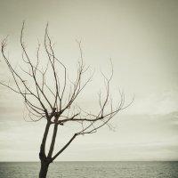 Молчание :: Mari_L