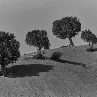 trees :: Vitaliy Dankov