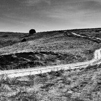 the road :: Vitaliy Dankov