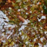 Осенне-зимний калейдоскоп. :: Татьяна Помогалова