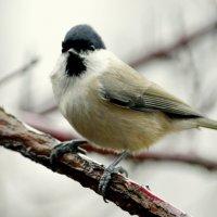 Птицы из парка 4 :: Сергей