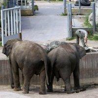 Два слона и смотритель))) :: Caren Yvonne Rikkilä