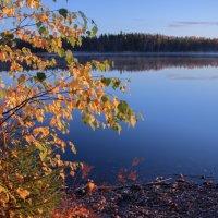 Утра радостные вестники-лучики солнца заглянули к нам на миг :: liudmila drake