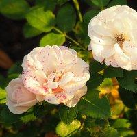 розы в оформлении города :: Олег Лукьянов