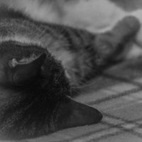 Немного о котиках :: Людмила Волдыкова