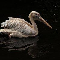 В тёмных водах :: Alexander Andronik