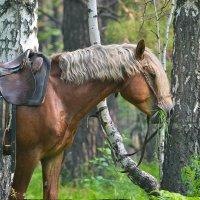 в алтайских лесах :: Елена Реморенко