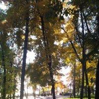В парке... :: Ueptkm