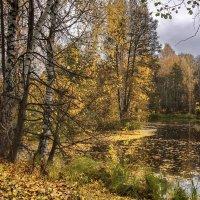 Про быстротечную золотую осень :: Владимир Макаров