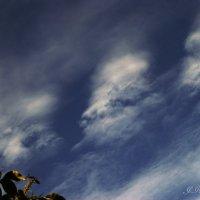 Облако с носом :) :: Елена Kазак