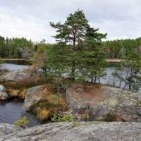 Вариации шведской осени :: Swetlana V