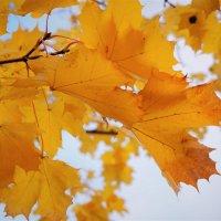 Золотой октябрь :: Swetlana V