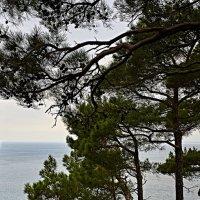 Деревья идут к обрыву :: Валерий Дворников