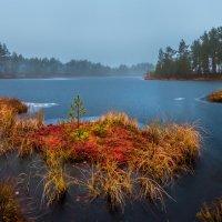 Осенний островок :: Фёдор. Лашков