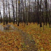 Осень очень по-настоящему :: Андрей Лукьянов