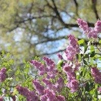 Вечная весна :: Владимир Марков
