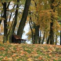Парк Аркадия. Одинокая скамья :: Gennadiy Karasev
