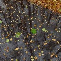 Доказательства осени :: Андрей Лукьянов