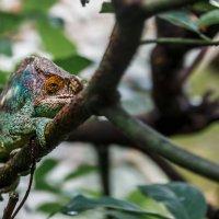 Где то на Мадагаскаре! :: Александр Вивчарик