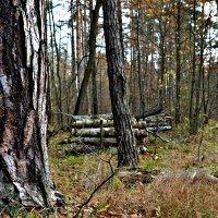 В осеннем лесу. :: Михаил Столяров